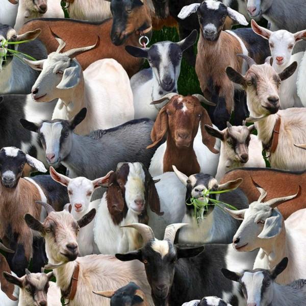 Ziegen Stoff Goats Farm Animals