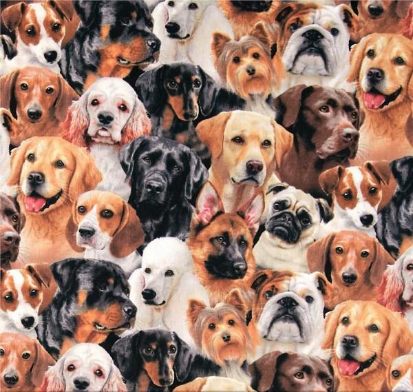 Hunde Stoff Dog Breeds