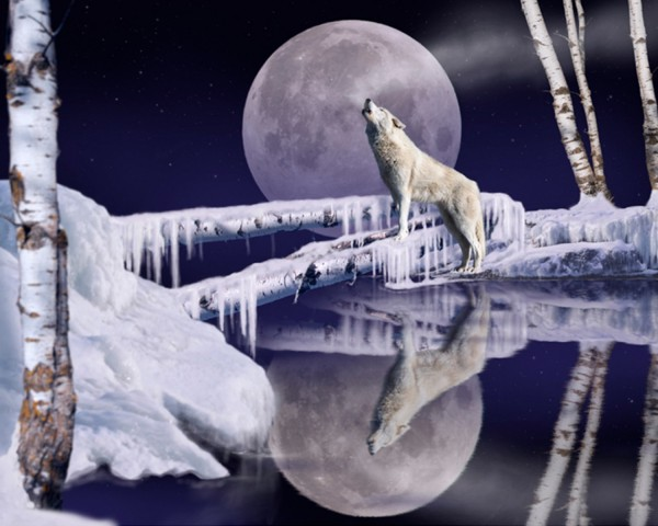 Open Water Wolf Panel