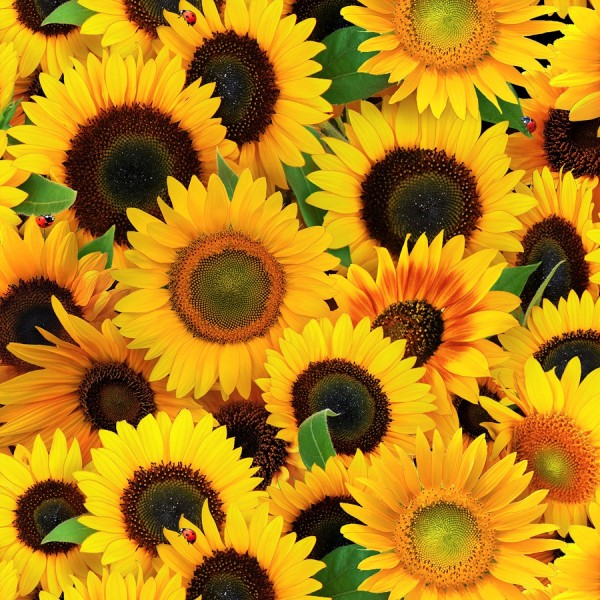 Sonnenblumen Stoff Yellow Sunflowers
