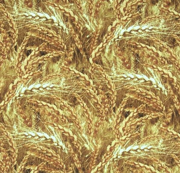 Golden Wheat Weizen Ähren