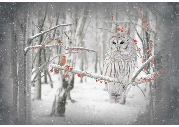 Snowy Owl Schnee Eule Panel